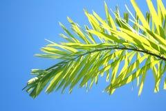 Bovenkant van mooie kleine palm royalty-vrije stock foto