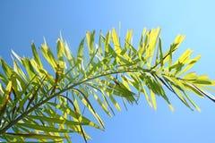 Bovenkant van mooie kleine palm royalty-vrije stock afbeeldingen