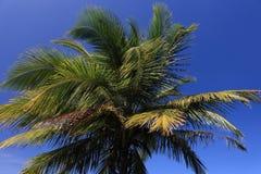 Bovenkant van palm Royalty-vrije Stock Foto