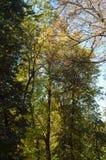 Bovenkanten van bomen stock foto's