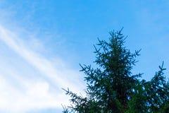 Bovenkanten van bomen tegen de hemel Stock Foto