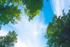 Bovenkanten van bomen tegen de hemel Royalty-vrije Stock Foto's