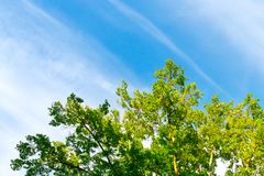 Bovenkanten van bomen tegen de hemel Stock Fotografie