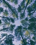 Bovenkanten van bomen tegen de hemel Royalty-vrije Stock Fotografie