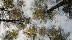 Bovenkanten van de bomen met gele bladeren in de herfstpark dat worden behandeld stock footage