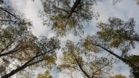 Bovenkanten van de bomen met gele bladeren in de herfstpark dat worden behandeld stock videobeelden