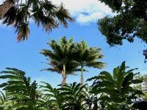 Bovenkanten van Tropische Palmen stock afbeelding
