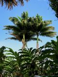 Bovenkanten van Tropische Palmen stock afbeeldingen