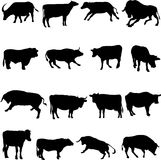 Bovine animals from around the world. Stock Photography