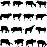 Bovine animals from around the world. A bovine is a human friend, a livestock Royalty Free Stock Images