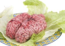 Bovine brain with letuce in white. Background Royalty Free Stock Image