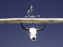 Bovine skull with rooster, wind measuring instrument Royalty Free Stock Image
