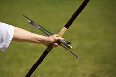 Bow and arrows Royalty Free Stock Image