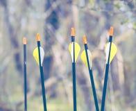Bow Arrows Sport archery concept summer Stock Photography