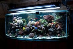 Bow front custom aquarium. Custom bow front glass reef aquarium Royalty Free Stock Photos