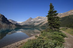 Bow Glacier and Lake Stock Photography