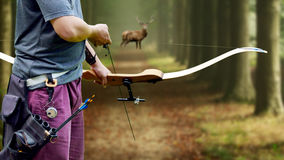 A bow hunter aiming at a White tail buck against. A bow hunter animal deer Royalty Free Stock Images