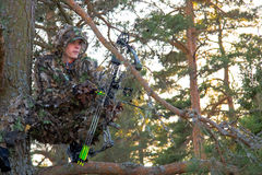 Bow hunter in tree. Bow hunter shouting for game, sitting on a branch in the forest Stock Photos