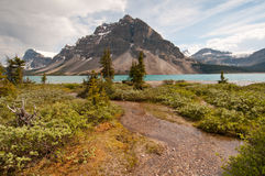 Bow Lake and greenery Royalty Free Stock Photo