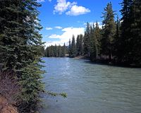Bow River, Alberta. Royalty Free Stock Photography