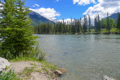 Bow River in Banff. Bow River running around and through Banff Royalty Free Stock Photo