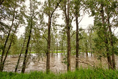 Bow River Flood Water Stock Image