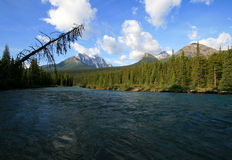 Bow River at Lake Louise Campground Royalty Free Stock Image