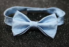 The bow tie Stock Photo