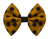 Bow tie with dots Stock Photos