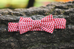 Bow-tie Royalty Free Stock Photography