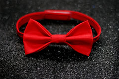 The bow tie Royalty Free Stock Photography
