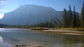 Bow valley banff mountain tree forest river royalty free stock photo