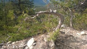 Bow valley banff  mountain tree. Wet land brook fishing mountain stream valley bow river mountain path forest way river valley hoodoo hoodoos clay natural form Stock Photo