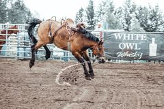 Free Bowden, Alberta, Canada, 26 July 2019 / Moments From The Bowden Daze, The Town`s Rodeo. Bronco Riding, Wild Horse Bucking And Stock Photo - 159244980