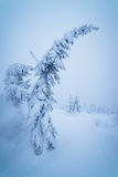 Bowed fir under the snow Royalty Free Stock Photos