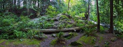 Bowen Island Long Exposure Mountains. Driftwood along Cates Beach, Bowen Island, BC, Canada Stock Photo