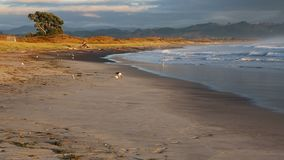 Waihi beach in morning light stock footage