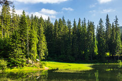 Bower on the lake in forest Royalty Free Stock Photos