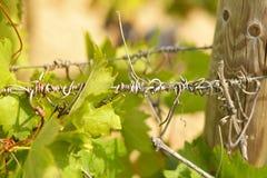 Bower of vines Stock Photo