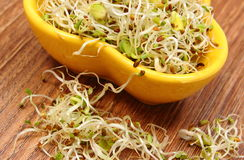 Bowl with alfalfa and radish sprouts on wooden table Royalty Free Stock Photography