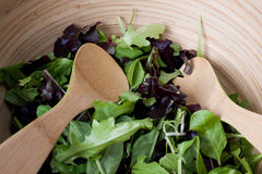 Bowl of baby green salad Stock Photos