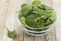 Bowl of baby spinach Royalty Free Stock Photography