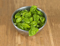 Bowl of Basil Royalty Free Stock Photo