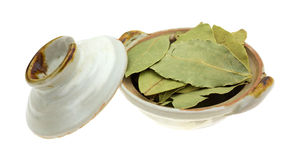 Bowl of basil leaves with lid Royalty Free Stock Photography