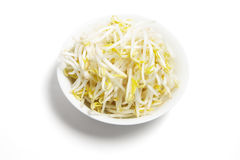 Bowl of Bean Sprouts Stock Image