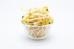 Bowl of Bean Sprouts Stock Photos