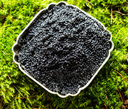 Bowl with black caviar on a background of moss with a lemon and a silver spoon Royalty Free Stock Image
