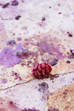 Bowl of blackberries. Blackberry in a dirty floor Royalty Free Stock Photos