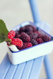 Bowl of blackberries. Bowl full of blackberries over a blue piece of wood Royalty Free Stock Photo
