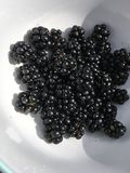 A bowl of blackberries. These are some black berries in a while bowl with a blue Royalty Free Stock Photo